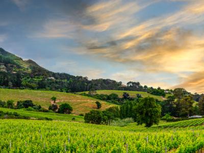 African Wines